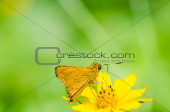 butterfly macro in green nature