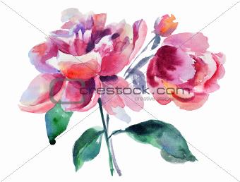 Beautiful Peony flower