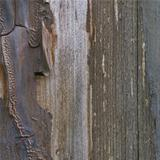 Old aged weathered grunge color-peel wood texture, detailed vert