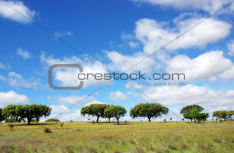 Oak trees at alentejo field