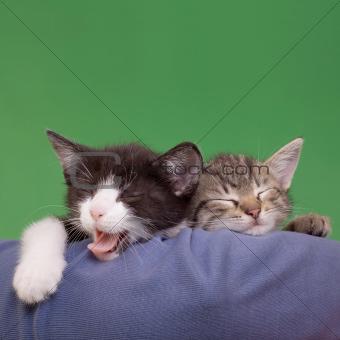 Dreamy Cats