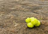 Star Gooseberry On stone