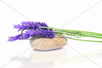 lavender and stone