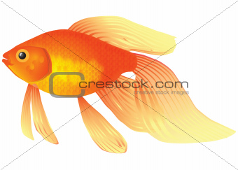 Goldfish aquarium