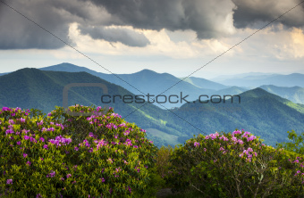 Blue Ridge Appalachian Mountain Peaks and Spring Rhododendron Flowers Blooming
