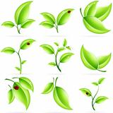 Fresh Green Leaves Icon Set