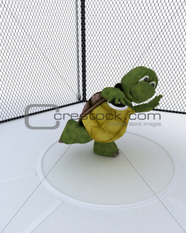 tortoise competing in discus