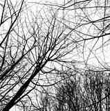 Winter trees without leaves