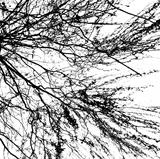 Branches of a tree without leaves