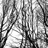 Bare wintry trees