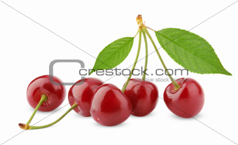 Sweet cherry berry fruit