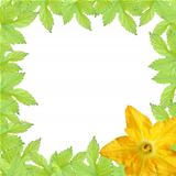 green leaves  frame with yellow pumpkin flower