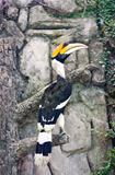 Hornbill