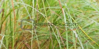long wet green grass background