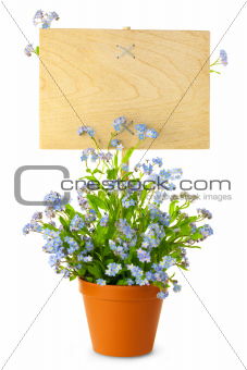 Wood Sign with Flowers / empty board for your text /  isolated o