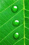 Water Drops on a Green Leaf  / Super Macro