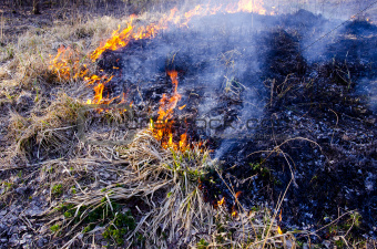 burning dry grass in spring time
