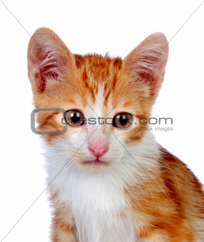 Adorable little cat