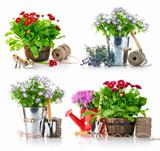 set garden flowers with tools