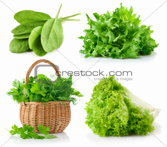 set fresh leaves herbs