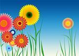 Spirograph inspired flowers