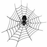Spider in a Cobweb