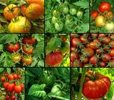 tomatoes set