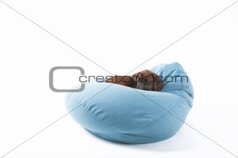 cute puppy on beanbag