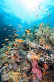 Beautiful tropical coral reef