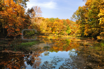 colorful autumn forest with lake