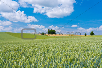 summer country landscape