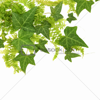 Beautiful Leaves Floral Border