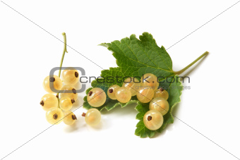 Berries of a white currant with leaf