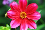 flower garden beautiful red