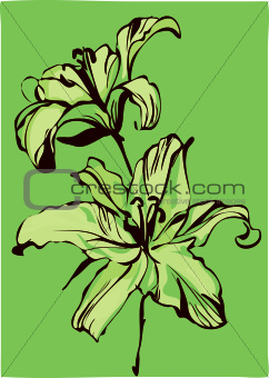 a two lilies on a green background