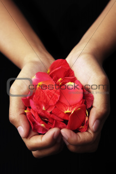 Hand holding red rose petals