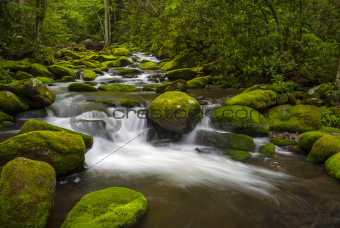 Great Smoky Mountains National Park Gatlinburg TN Roaring Fork River