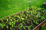Watrering an urban garden