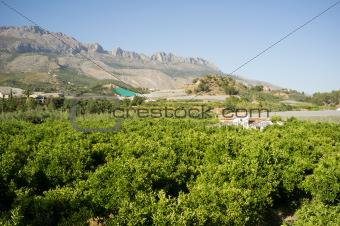 Costa Blanca rural landscape