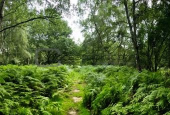 ashridge woods path hertfordshire england