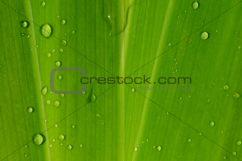green leaf background, texture