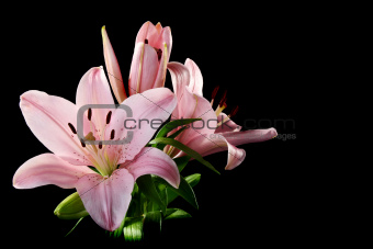 Beautiful bouquet of pink lilies.