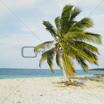 Cayo Sabinal, Camaguey Province, Cuba