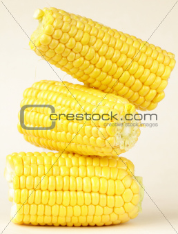 fresh corn vegetable  on white background