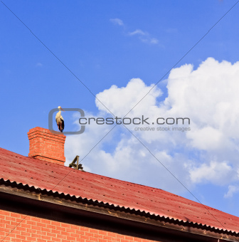 Stork sitting on the top of a roof