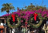 Christmas Wreaths Purple Bougananvilla Cactus Garden Old San Die