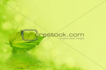 A green bug on a leaf