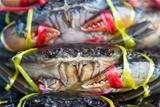 Fresh crabs on sale