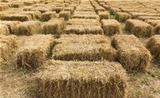 Straw bales in row