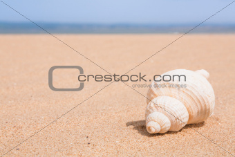 Beach scene with copy space